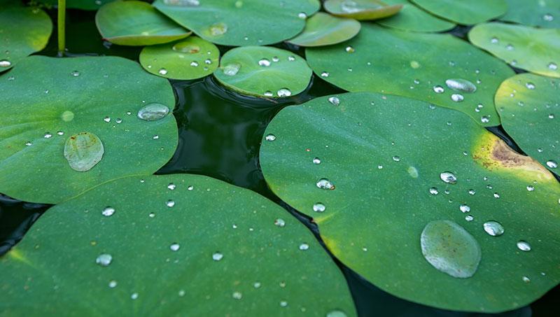 Lotus-effect by nanoINOX®, AntiFingerPrint en Easy-to-Clean.